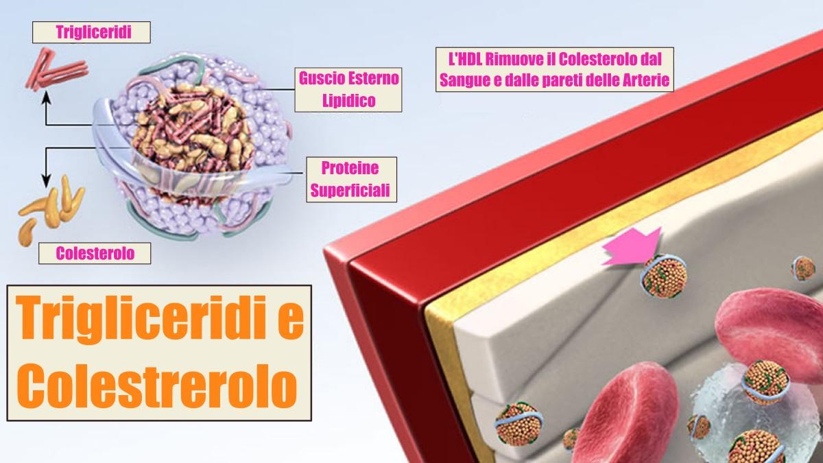 Immagine Trigliceridi e Colesterolo