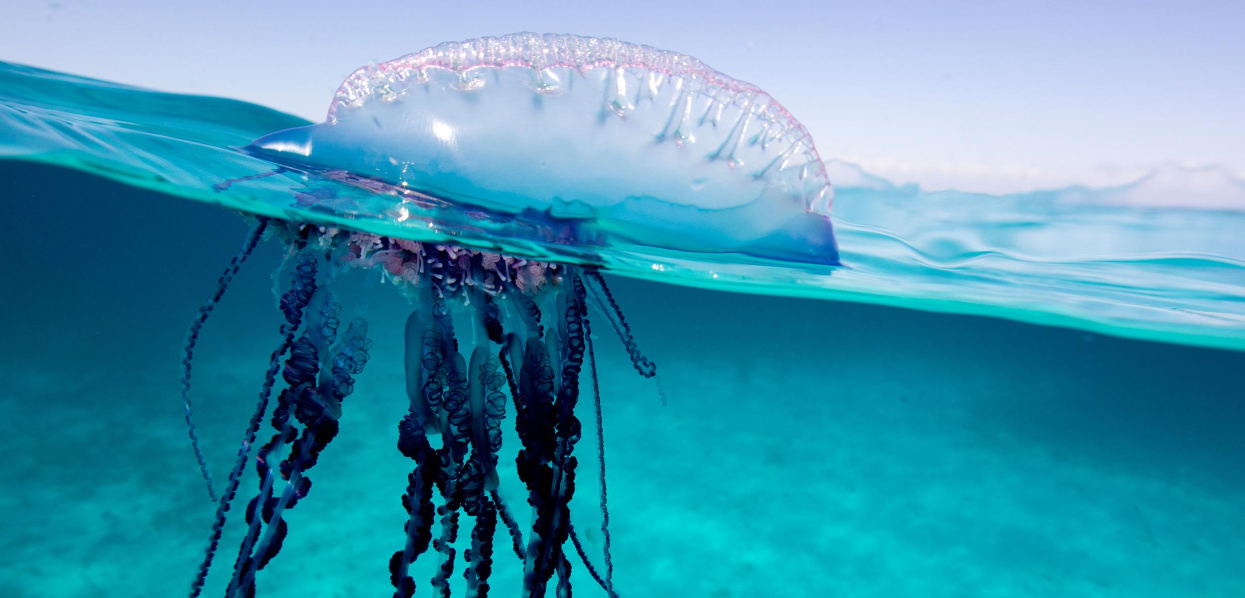 Metodo evitare meduse